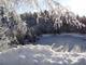 gefrorener Stoabruchweiher