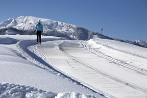 Nr. 3 Winterwald - Loipe
